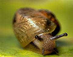 Snail - photo by Yogendra Joshi